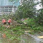 起跑下雨树倒阻路-宽二义跑取消